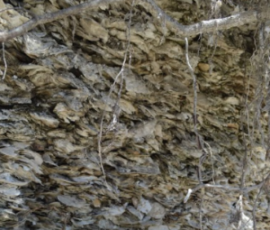 Shells stacked upon one another at a midden.