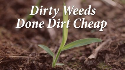 Dirty Weeds Done Dirt Cheap