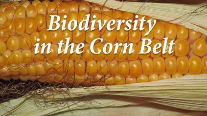 Biodiversity in the Corn Belt