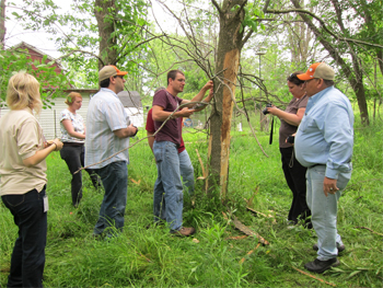 researchers stripping bark from ash tree