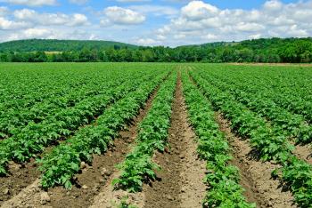 crop rows in field