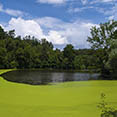 Lake algae