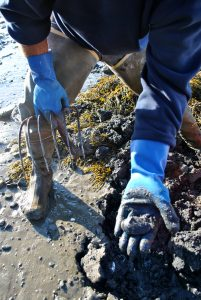 Shellfish contamination is just one real-world problem researchers are investigating.