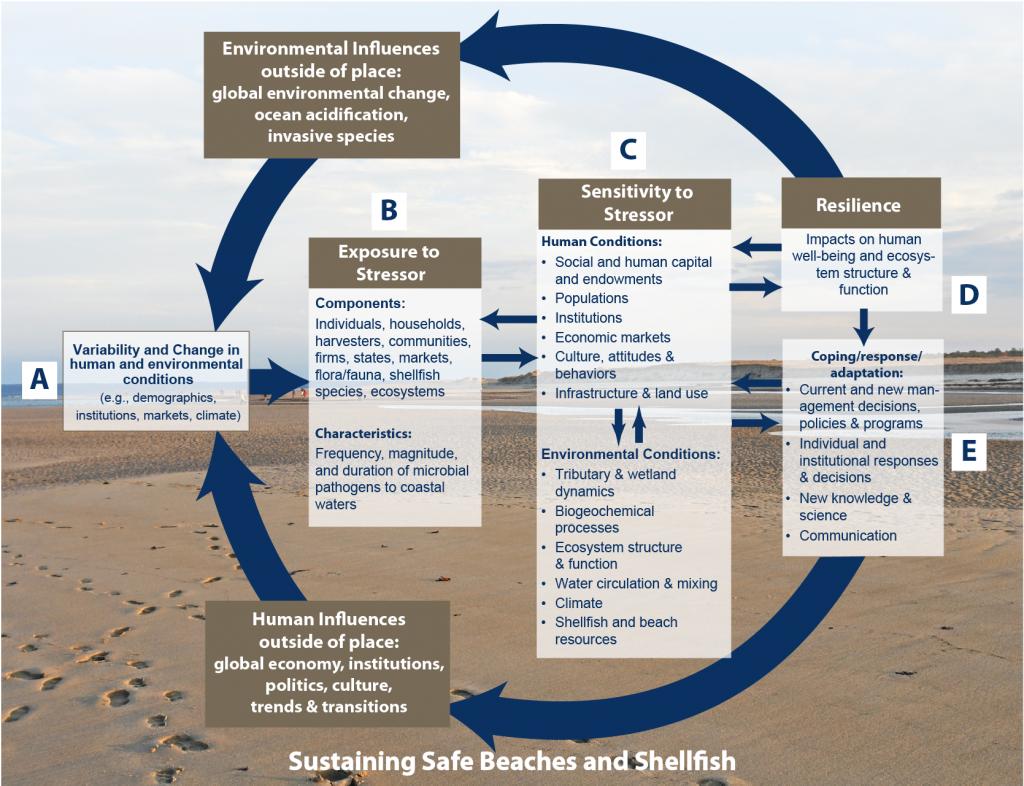 NEST conceptual model