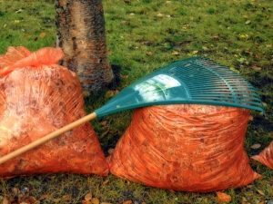 Autumn Leaves in bags