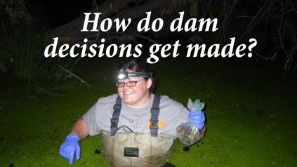 How do dam decisions get made?