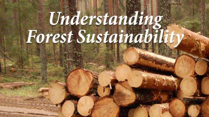 Understanding forest sustainability