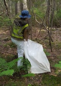 Dragging undergrowth for ticks