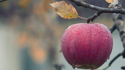 Fall apple