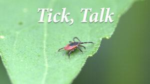 Tick, Talk