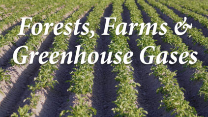 Forests, Farms & Greenhouse Gases