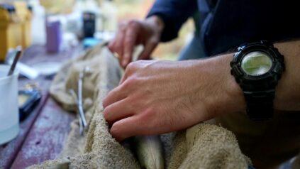 Tagging an eel