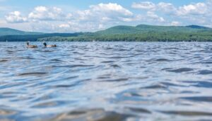 View of Sebago Lake, Maine, at water level with ducks and mountains in background