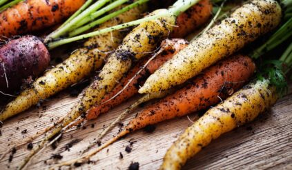 rainbow carrots with dirt and greens on wooden board