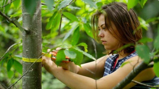 intern measuring a tree