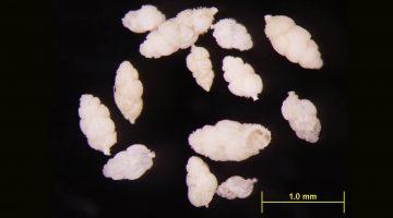 Tiny fossils