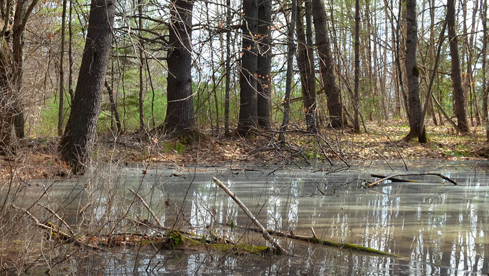 Vernal pool in a forest