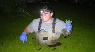 Sarah Vogel catching bullfrogs in Arizona