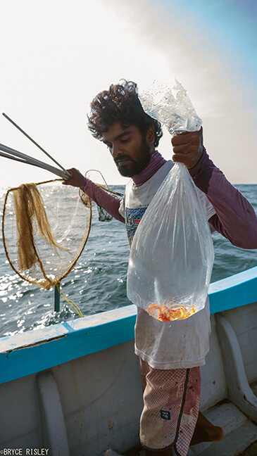 fish collector with shrimp