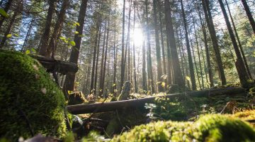 Forestry news feature