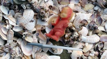 Trash on a beach