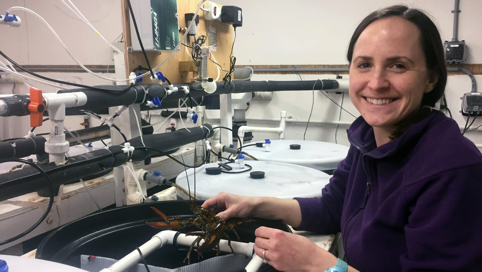 Lobster in a lab