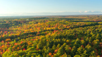 Aerial image of a Maine forest
