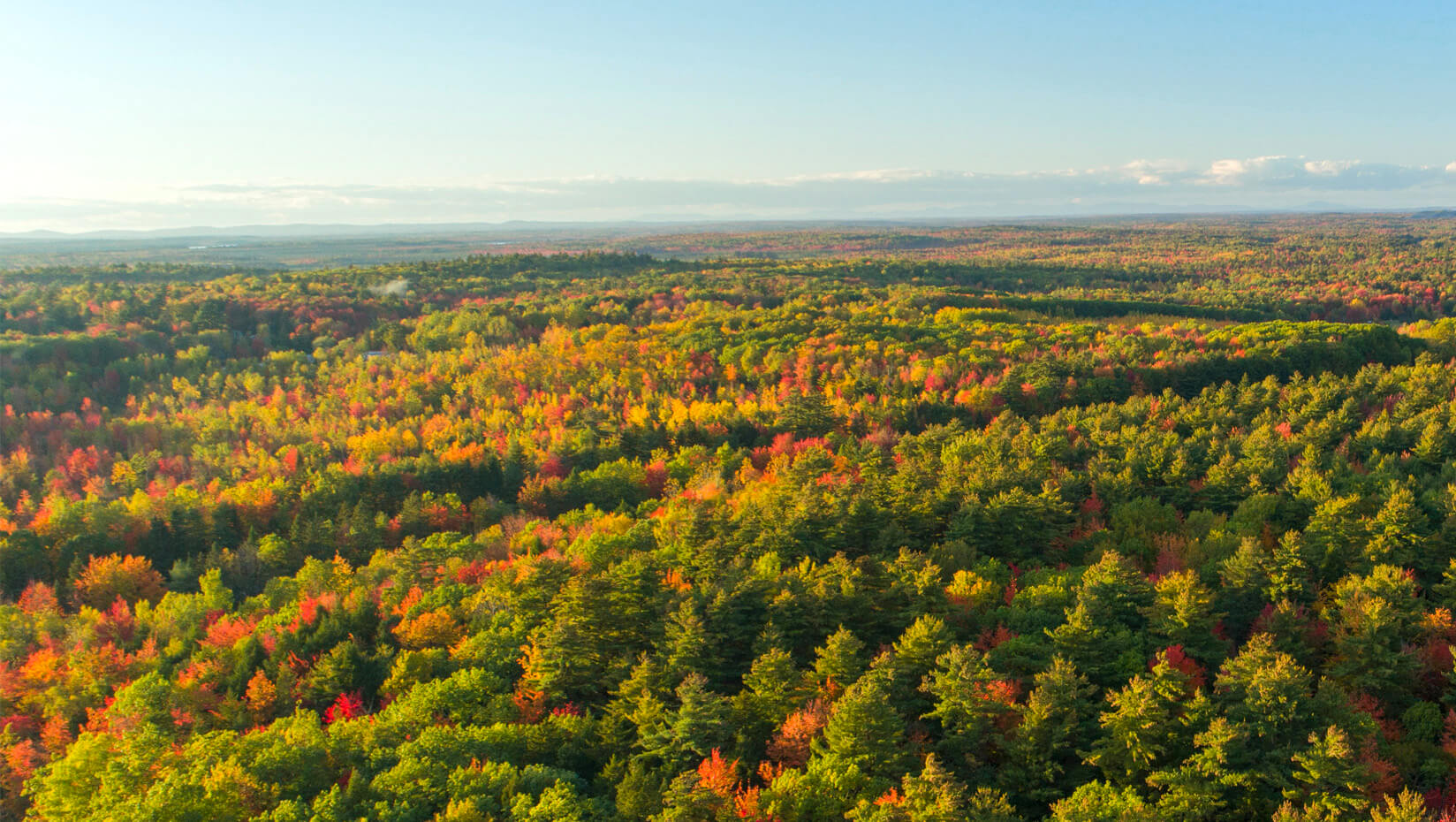 featured image for NASA grant funds UMaine remote sensing research for large-scale forest health assessment