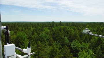 Forest with sensors