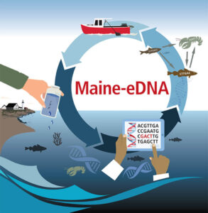 Maine-eDNA graphic