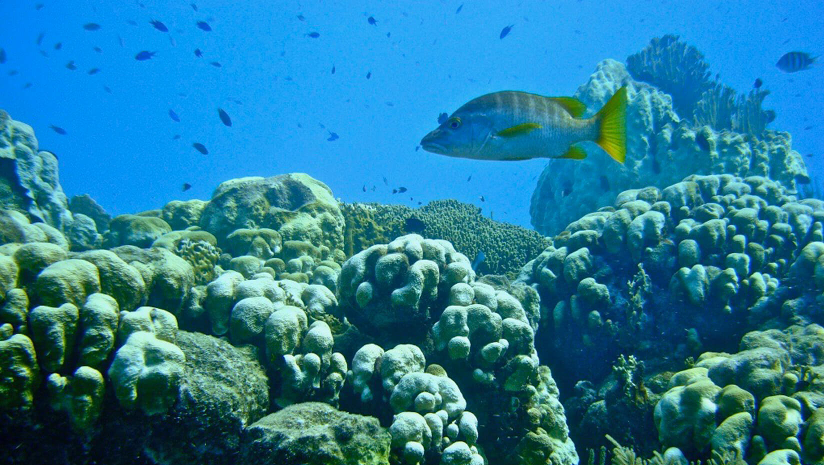 Fish and a coral reef