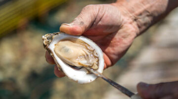 Hand holding an oyster