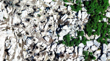 Aerial image of birds on a Maine island