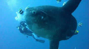 Samuel Tan diving with fish in the ocean