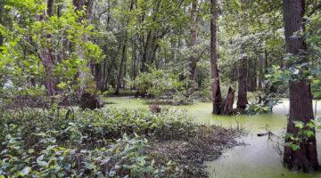 Grand Kankakee Marsh