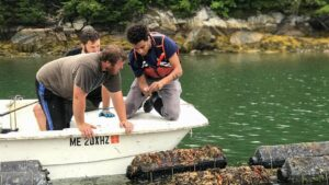 Students in a boat conducting oyster research