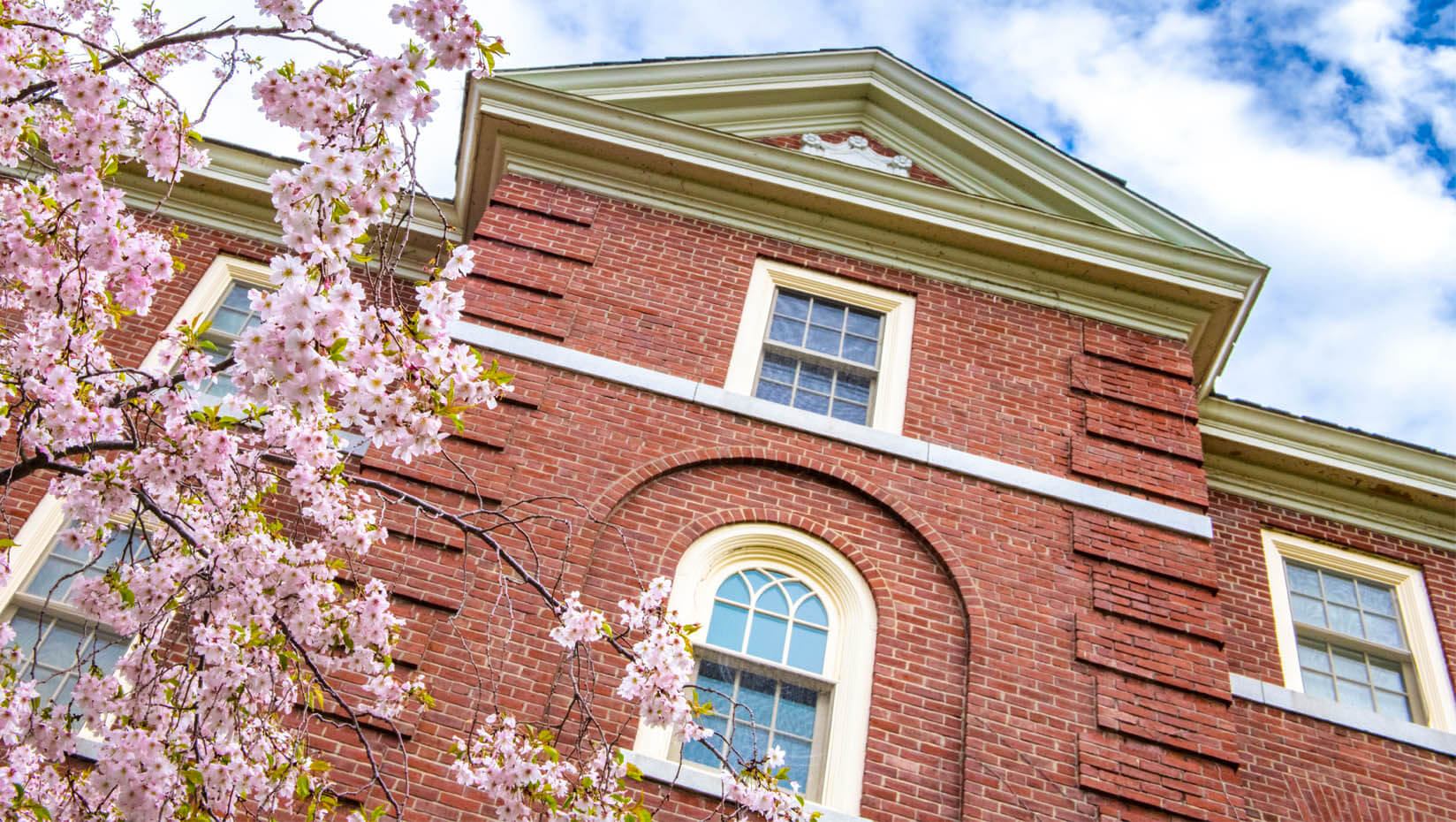 A flowering tree blooms outside a brick building