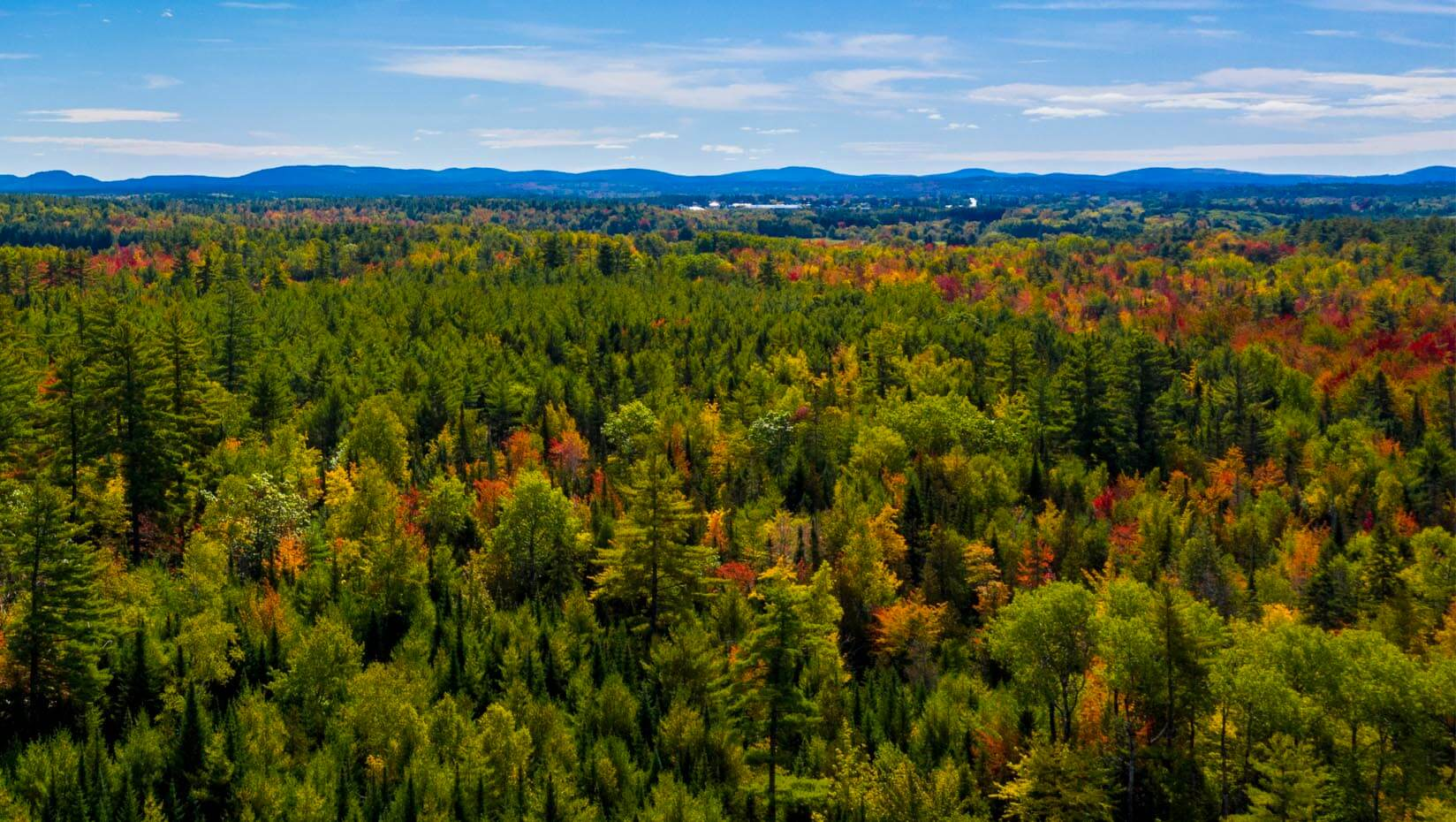 An aerial image of a Maine forest with some trees turning bring fall colors