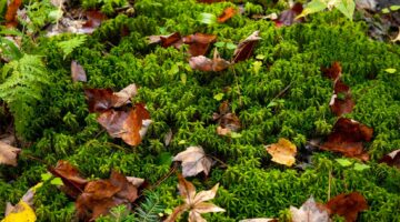 Leaves and plants on the forest floor