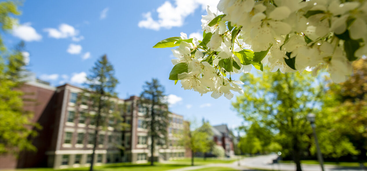 Image of university campus in spring