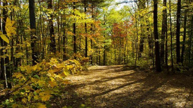 Maine woods in summer
