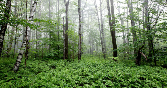 Picture of greenery in woods