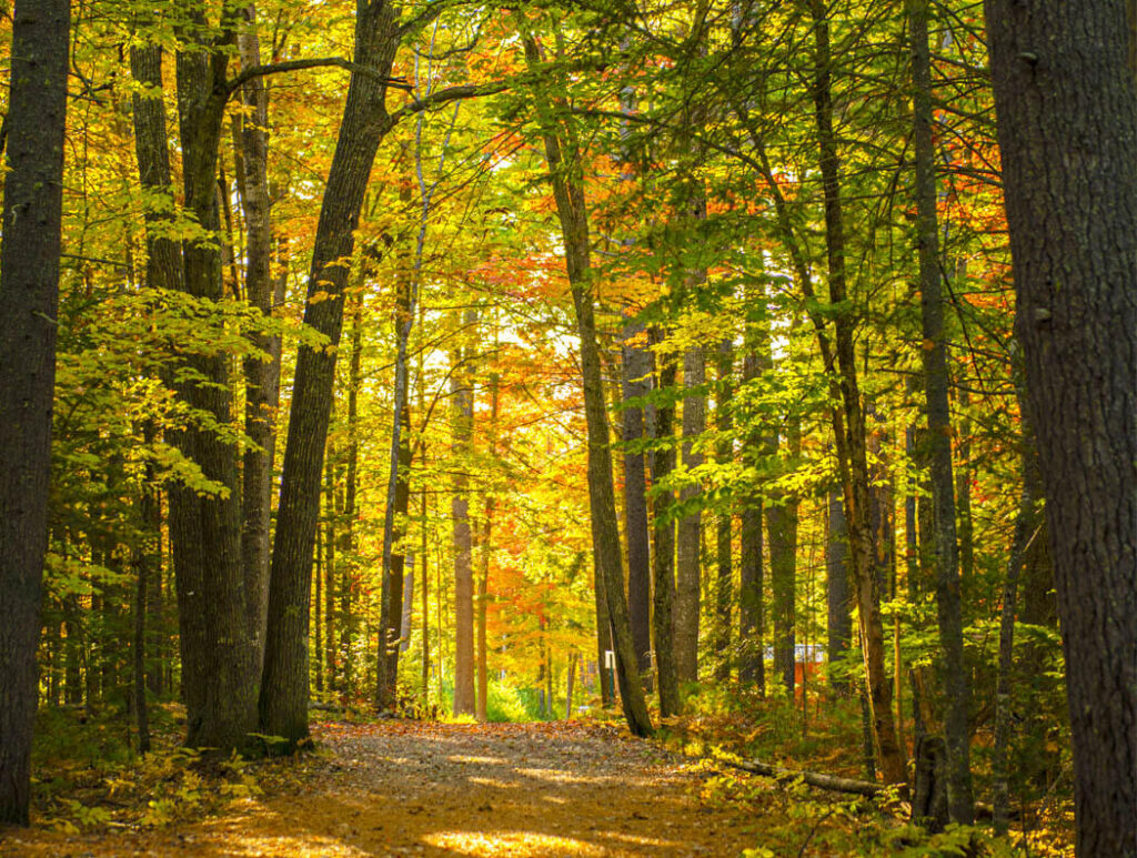 A forest path at UMaine
