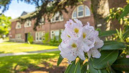 Flowers outside Alumni Hall