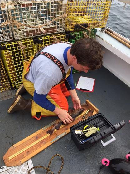 Boenish measuring fish