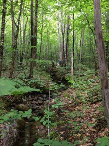 forest near stream