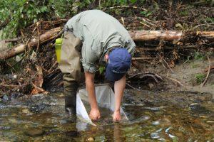 collecting stream data