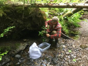 collecting samples