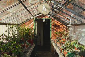 Interior of Greenhouse