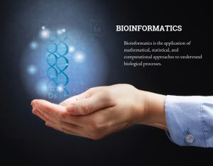 Bioinformatics is the application of mathematical, statistical, and computational approaches to understand biological processes.